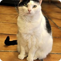 Adopt A Pet :: Razz - Northbrook, IL