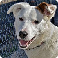 Adopt A Pet :: Windy - Meridian, ID