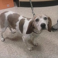 Adopt A Pet :: Chompy - Springfield, OH
