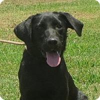 Adopt A Pet :: Miracle - Salem, NH