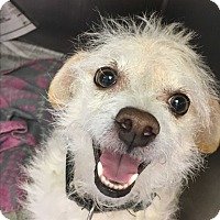 Adopt A Pet :: Gidget - Visalia, CA
