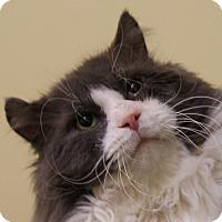 Adopt A Pet :: Goose - Dundee, MI