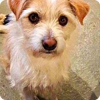 Adopt A Pet :: Cody - Little Rock, AR