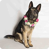 Adopt A Pet :: Tara - Kouts, IN