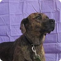 Adopt A Pet :: Lola - LaGrange, KY