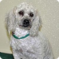 Adopt A Pet :: Lucky - Port Washington, NY
