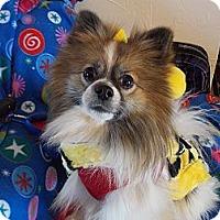 Adopt A Pet :: RIO - Hesperus, CO