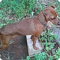 Adopt A Pet :: Bella - McDonough, GA