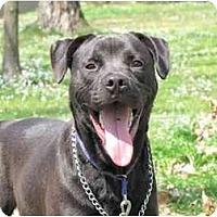 Adopt A Pet :: Pepper - Chicago, IL