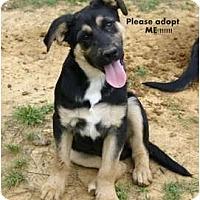 Adopt A Pet :: Zack - New Boston, NH