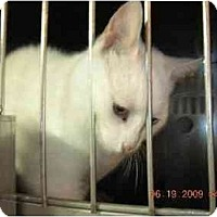 Adopt A Pet :: Bonnie - Union, SC
