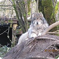 Adopt A Pet :: Oso - Ashland, OR