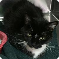Adopt A Pet :: Judy Garland - Richboro, PA