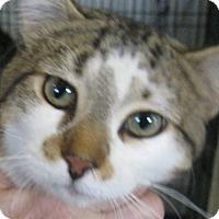 Adopt A Pet :: Tiger - Chisholm, MN
