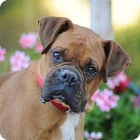 Adopt A Pet :: Tammy - Alameda, CA