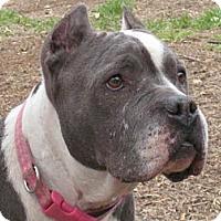 Adopt A Pet :: Grace - Santa Monica, CA