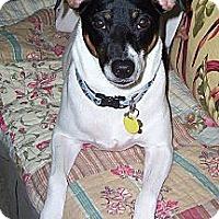 Adopt A Pet :: Sgt Tommy - Jacksonville, FL