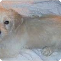 Adopt A Pet :: FRAZIL - Rossford, OH