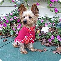 Adopt A Pet :: Harrison - Fremont, CA