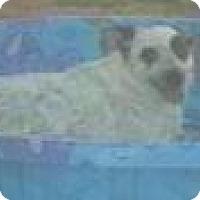 Adopt A Pet :: Janet Wood - BEAUTY! - Phoenix, AZ