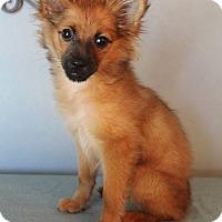 Adopt A Pet :: Rafiki - Bedminster, NJ