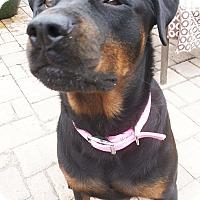 Adopt A Pet :: SCHATZI - Seffner, FL