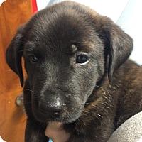 Adopt A Pet :: Fergie#3F - Orlando, FL