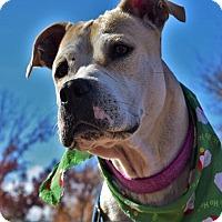 Adopt A Pet :: Sunny - Austin, TX