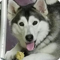 Adopt A Pet :: Daisy - Augusta County, VA