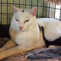 Adopt A Pet :: Blinky - Breinigsville, PA