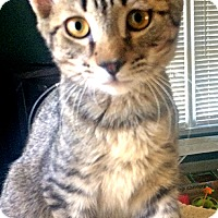 Adopt A Pet :: Hoodie - Youngsville, NC