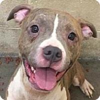Adopt A Pet :: Gretel - Springdale, AR