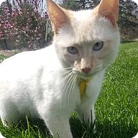 Adopt A Pet :: Ember - Oakland, MI