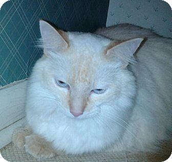 Ragdoll Cat for adoption in Columbus, Ohio - Fendi