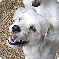 Adopt A Pet :: Karlee - Allentown, PA