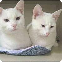 Adopt A Pet :: Dante and Shasta - Mesa, AZ