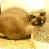 Adopt A Pet :: Enya - Columbus, OH