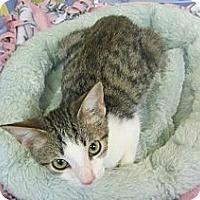 Adopt A Pet :: Topaz - Mobile, AL