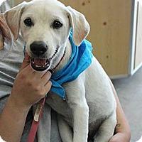 Adopt A Pet :: Shiver - ADOPTION PENDING - Somers, CT