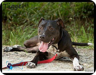 Hound (Unknown Type) Mix Dog for adoption in Sarasota, Florida - Heidi