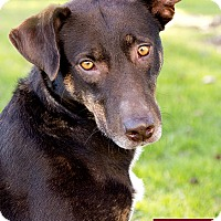 Adopt A Pet :: Nena - Marina del Rey, CA