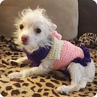 Adopt A Pet :: Dot - Las Vegas, NV