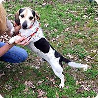 Adopt A Pet :: JIMMY - Pennsville, NJ