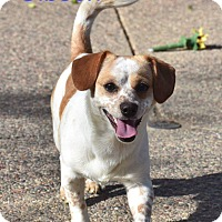 Adopt A Pet :: Gibson - Concord, CA
