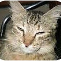 Adopt A Pet :: BeBe - Anchorage, AK