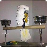 Adopt A Pet :: ANGEL - Mantua, OH