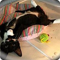 Adopt A Pet :: Shelton & Steam Roller - Deerfield Beach, FL