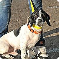 Adopt A Pet :: Paulie- COURTESY POSTING - Crystal River, FL