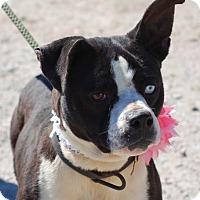 Adopt A Pet :: SASHA - North Augusta, SC
