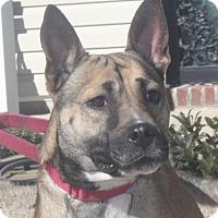 Adopt A Pet :: Madison - Marion, AR
